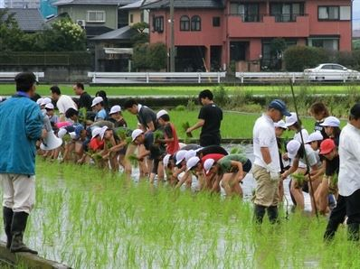 日吉東小学校の田植体験