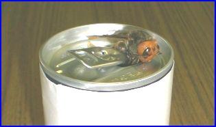ハチがジュースの缶の口から入っている写真