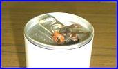 ハチがジュースの缶の口から入っている写真1