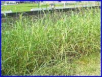 繁茂した草のイメージ。家電リサイクル法の影響か不法投棄が結構多いです