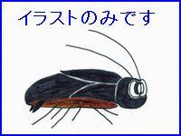 ゴキブリのイラスト。寒くなるとあたたかいところに集団でいます。