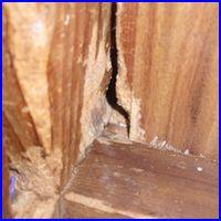 壁の隙間の写真。壁をかじって穴をあけ通路をつくります。