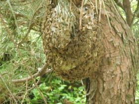 蜂の巣の写真