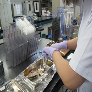 食品に関する細菌・ウイルス検査