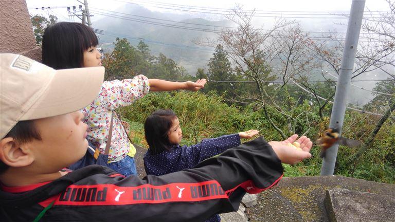 金峰山野鳥観察