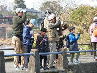上江津湖野鳥観察