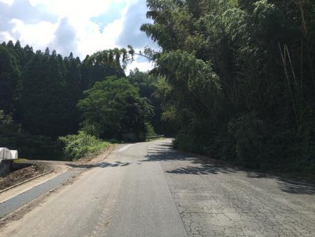 道路上に張り出した樹木