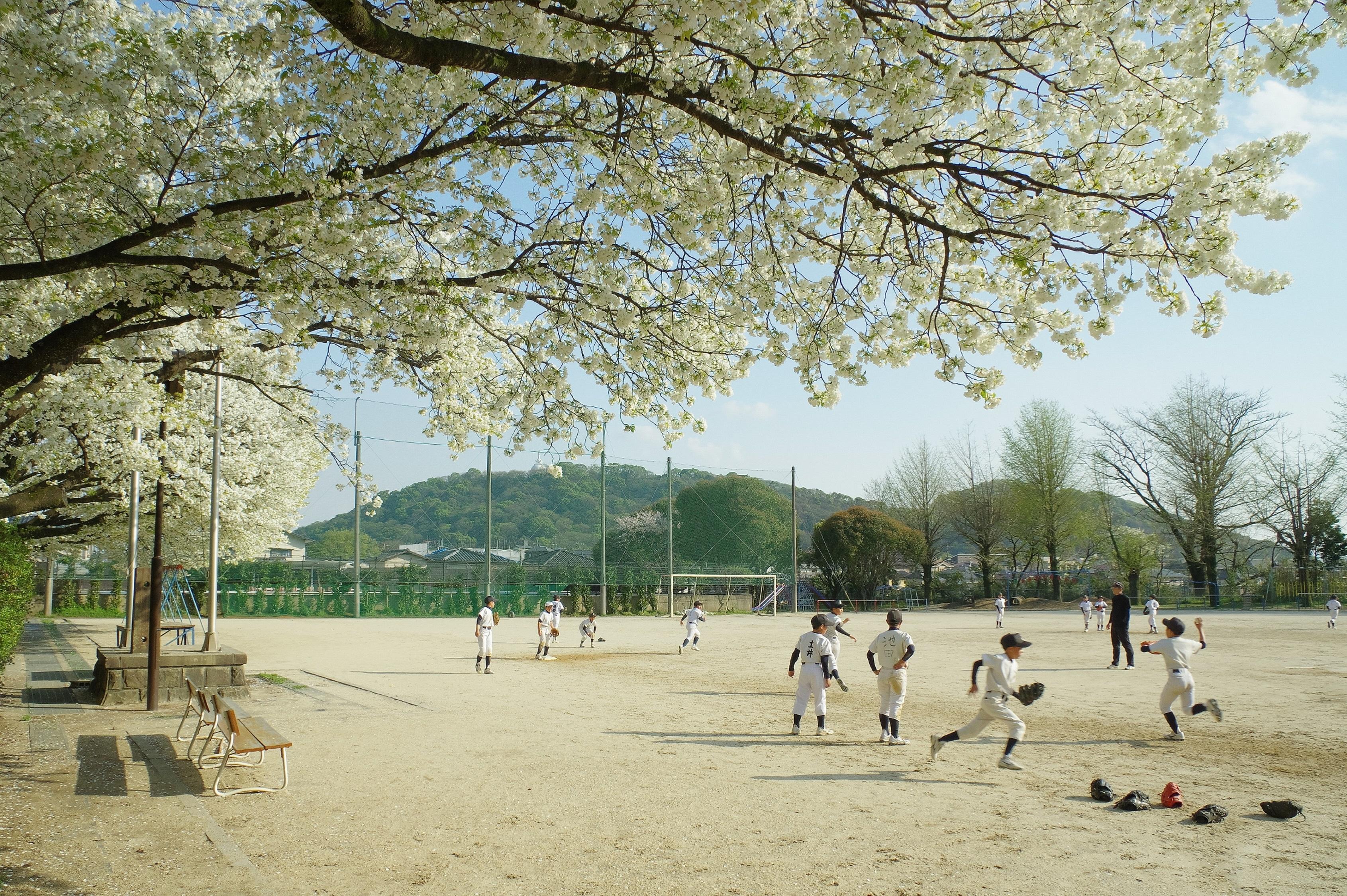 咲き誇る千原桜のもとへ
