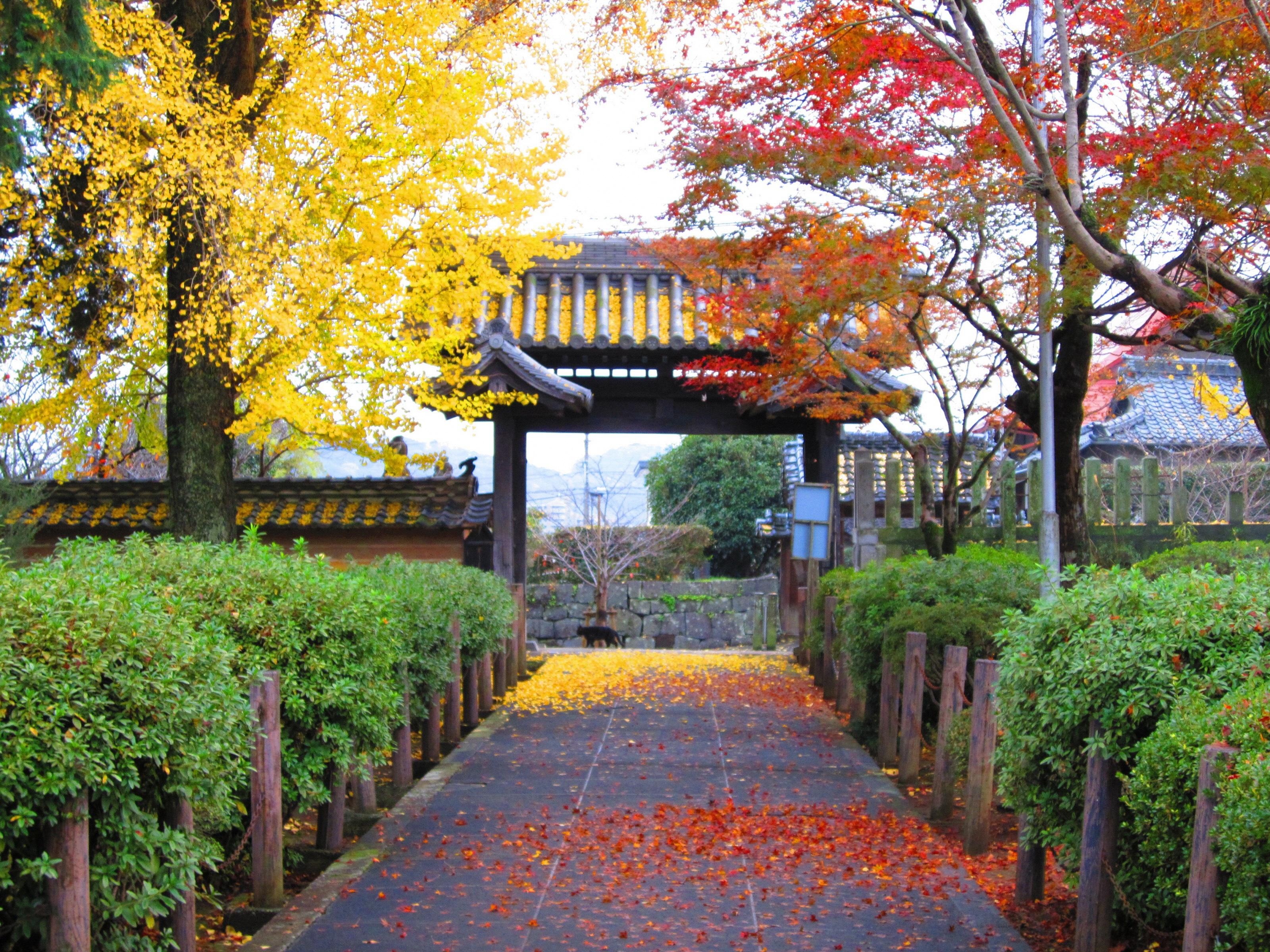 秋の本妙寺