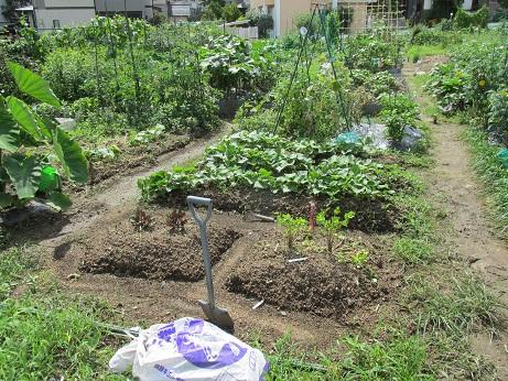 農園写真2