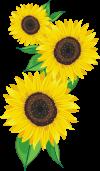 北区の花「ひまわり」
