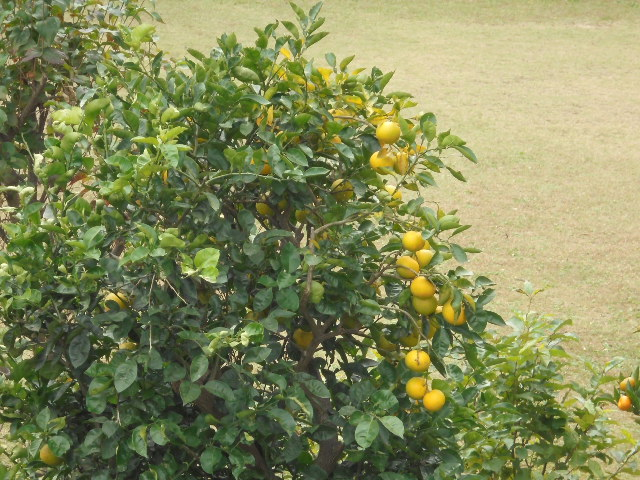 みかん黄色