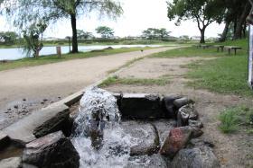 江津湖の湧水