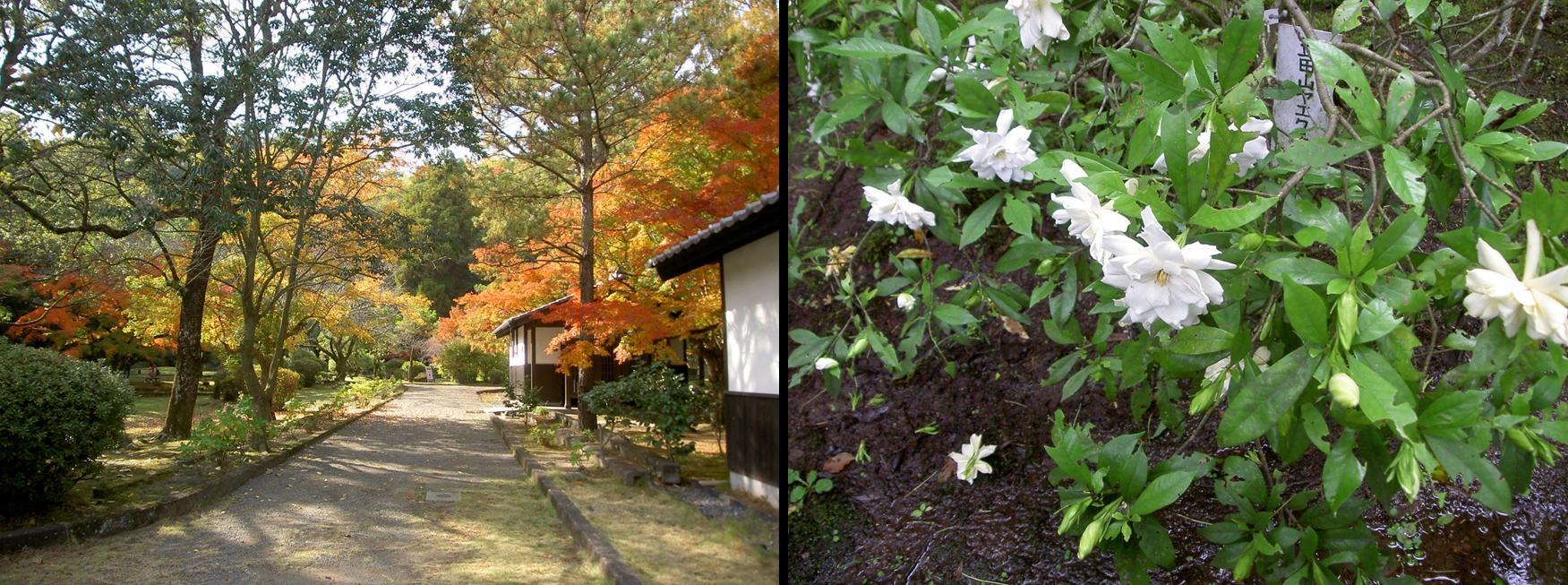 北岡自然公園紅葉と立田ヤエクチナシ