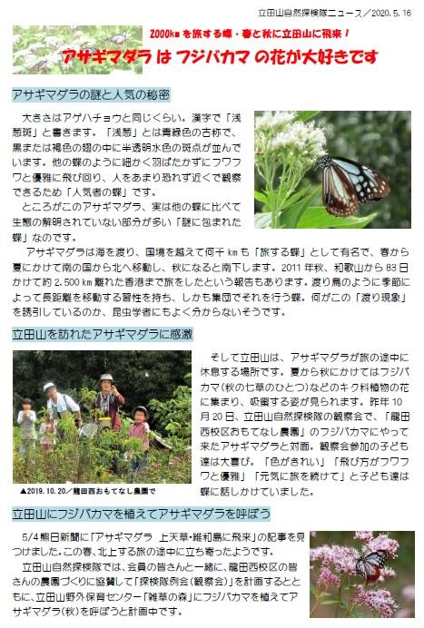 立田山自然探検隊ニュース3(アサギマダラ)