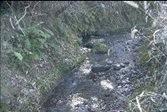 成道寺川流域の水域生態系