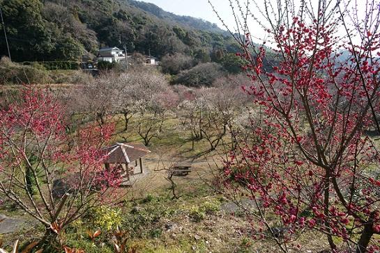 谷尾崎梅林公園
