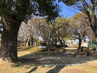 4201(樹の公園)2