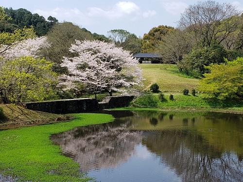 102龍田西校区 立田山の桜