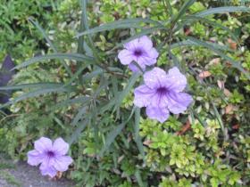10月 今月の花