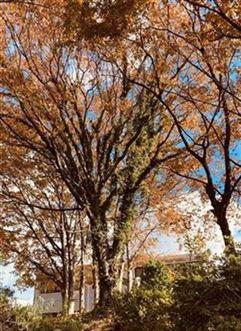 ちょっと遅い紅葉の林
