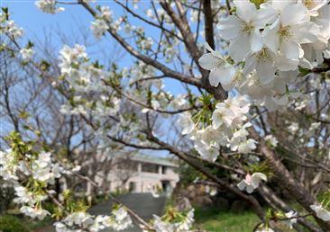 花に包まれる公民館