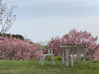 図書室前の野鳥の特等席 🌸野鳥もお花見喜んでるかな🌸