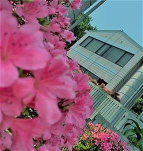 ピンク色のツツジを眺めながら、ぜひ図書室へ