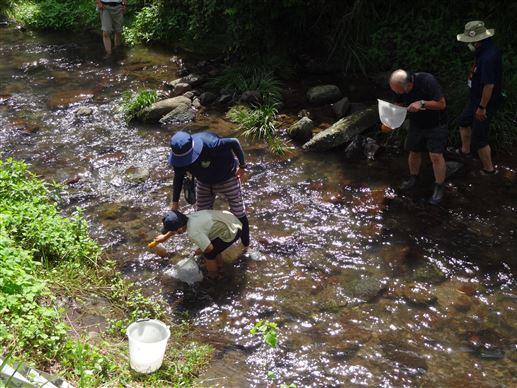 河内川の水生生物調べ(2)