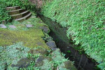 前川の井川端
